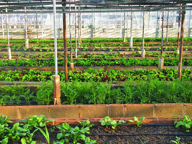 skleníkové zemědělství